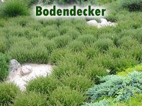 Hangbepflanzung Bodendecker bodendecker