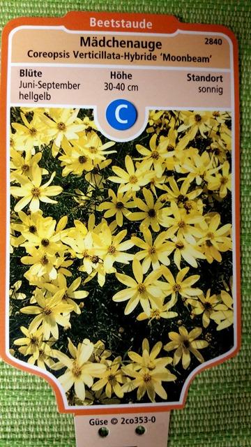 M dchenauge moonbeam preiswerte gartenpflanzen mit versand for Gartenpflanzen versand