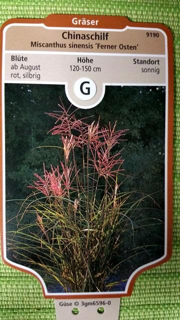 Garten chinaschilf ferner osten preiswerte for Gartenpflanzen versand